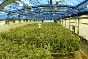 Real Estate in the Cannabis Industry Comes With Constraints- Island Stage Magazine
